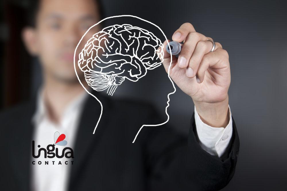 схематическое изображение мозга, нарисованного на доске