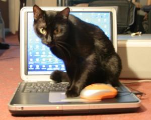 CAT tools