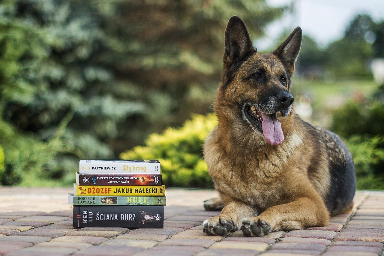 Немецкая овчарка и книги